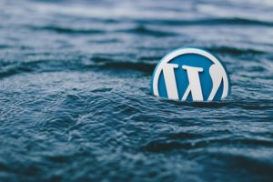 programista wordpress
